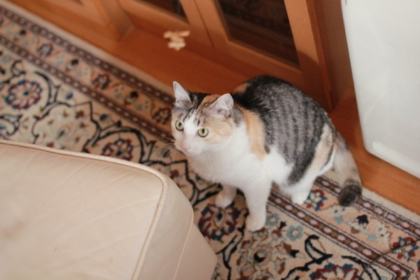 lovefcats11.jpg
