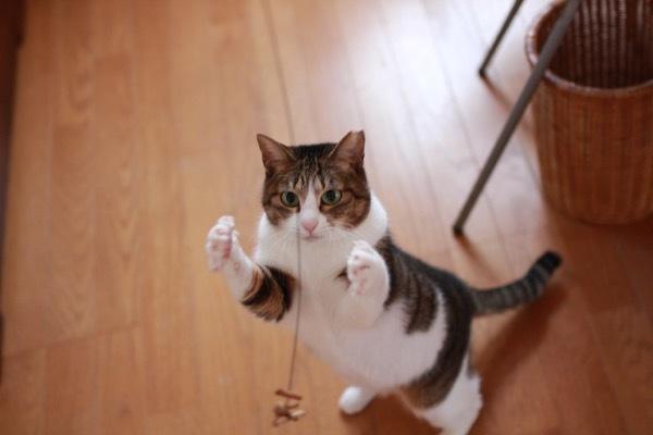 lovefcats4.jpg