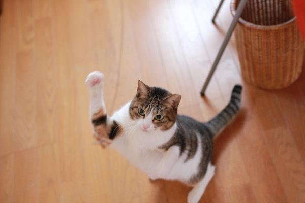 lovefcats5.jpg