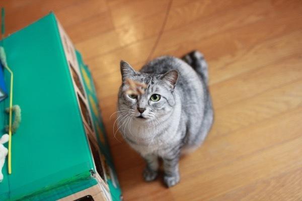 lovefcats6.jpg
