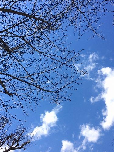 華地方の桜