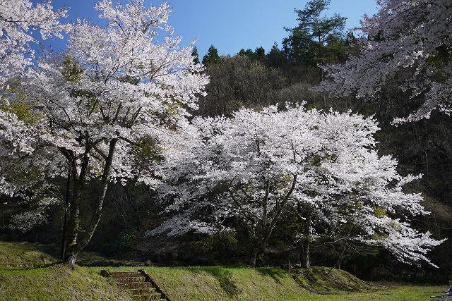 s-15:28桜