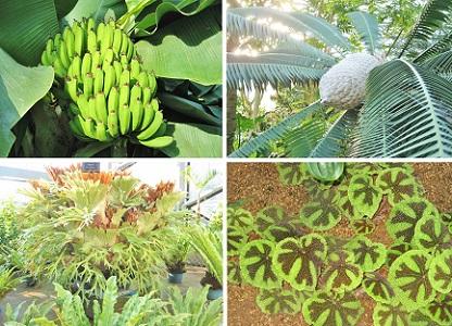 いろいろ植物