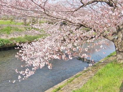 春の小川は