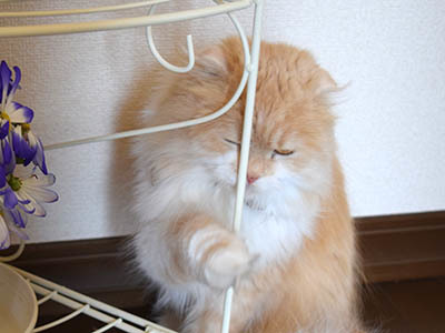 占いミーコ20113