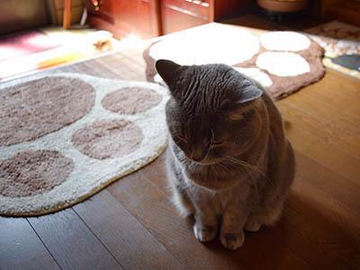 占いミーコ20124