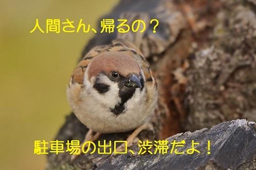 010_2017031818415189c.jpg