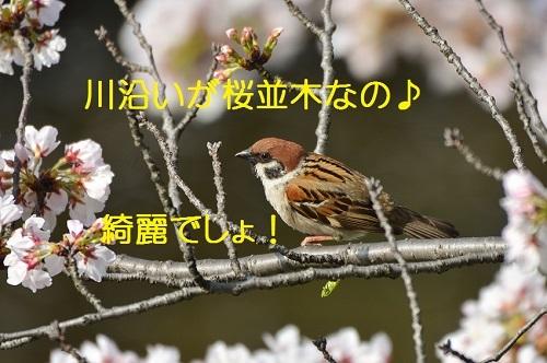 010_20170409212356101.jpg