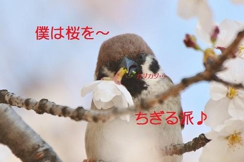 010_20170413191207b17.jpg