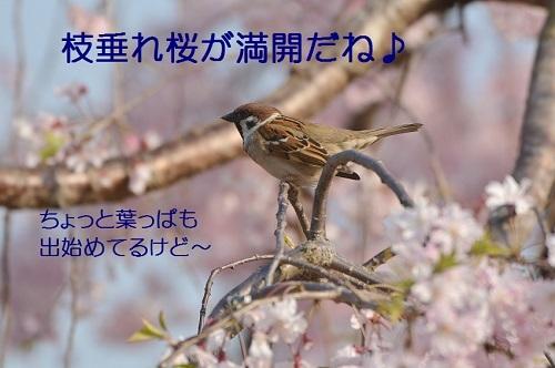 010_2017041720011420c.jpg