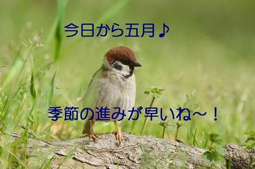 010_2017050119274632c.jpg