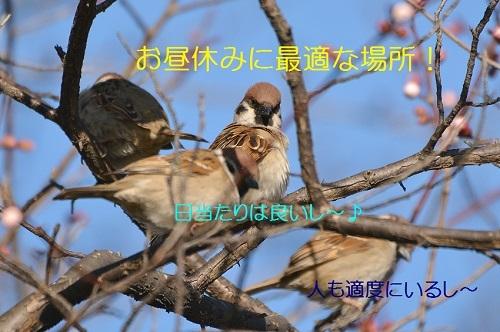 020_2017031520331811c.jpg