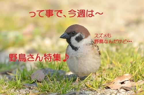 020_20170327181907448.jpg