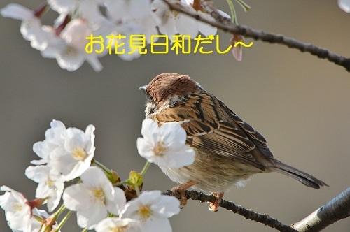 020_20170412190850c0f.jpg