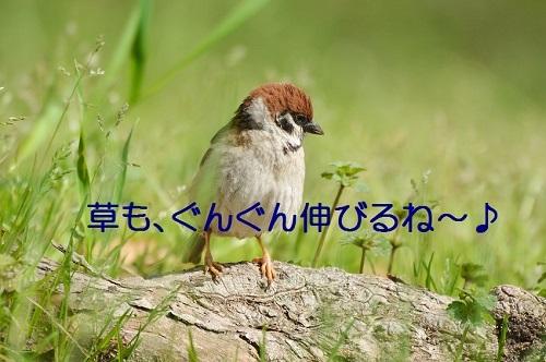 020_20170501192747fcf.jpg