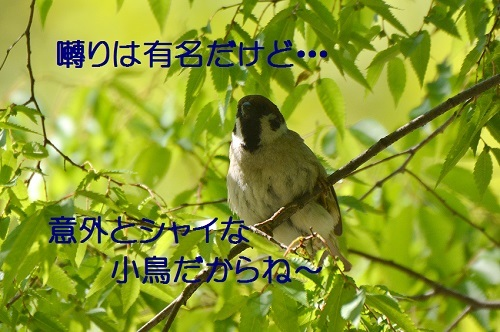 020_20170503214621fe3.jpg