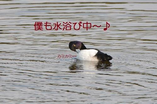 030_20170329193651686.jpg