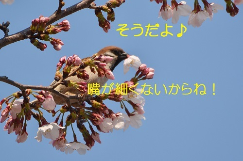 030_20170410183209c5e.jpg