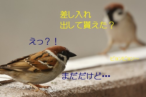 030_20170418191938fc5.jpg
