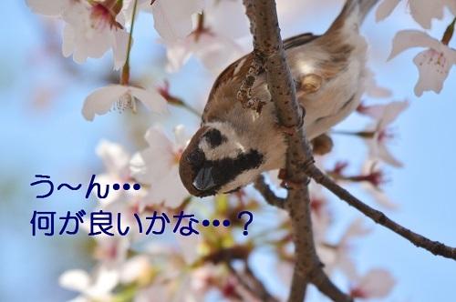 030_20170419212313e12.jpg
