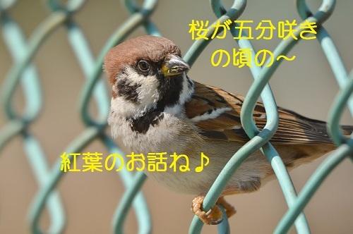 030_20170420191438e56.jpg