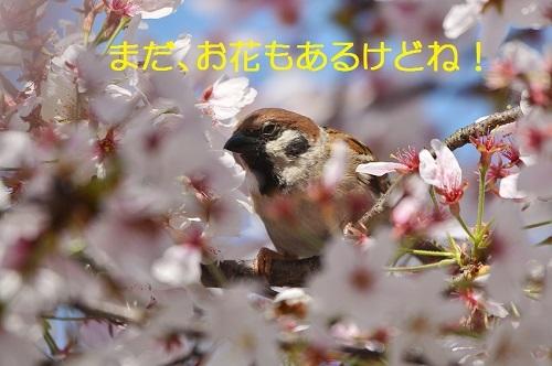 030_20170421193245e9b.jpg