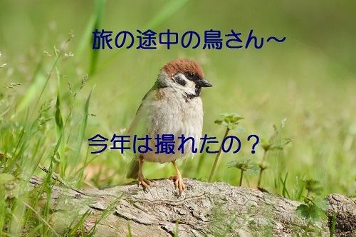 030_20170501192749e68.jpg