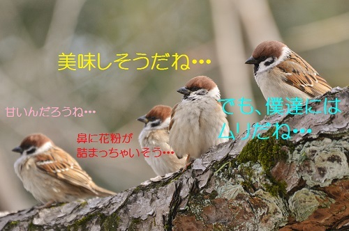 040_201702251826141ed.jpg