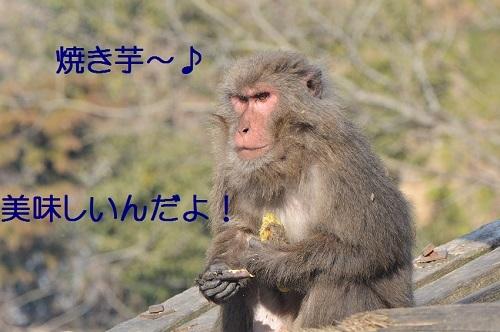 040_20170302194114ffd.jpg