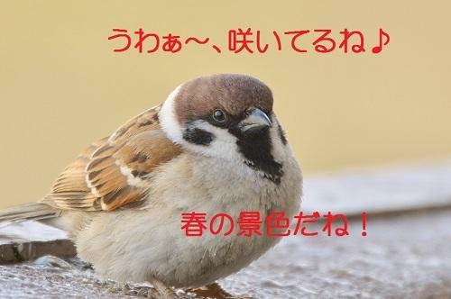 040_201703122225055f6.jpg