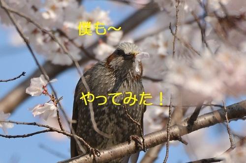 040_20170410183210dd9.jpg