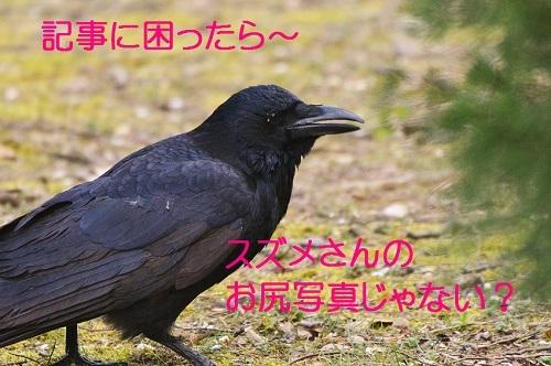 050_2017032023093848f.jpg