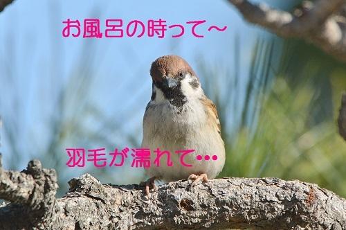 050_20170325214340d17.jpg