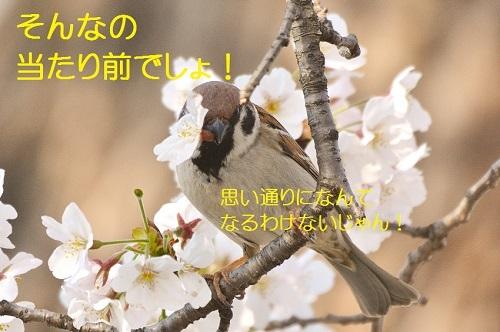 050_20170416211300f63.jpg