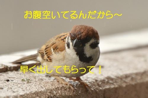 050_20170418191941a97.jpg