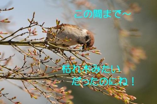 050_20170420191440163.jpg