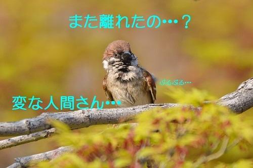 050_201704252002304d3.jpg