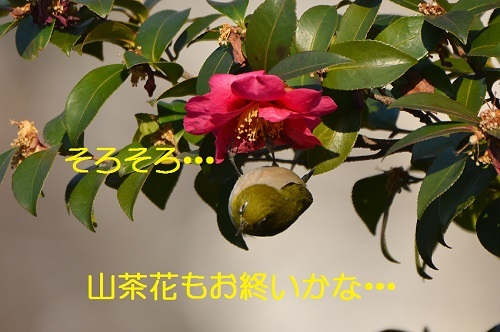 060_20170225182644c14.jpg