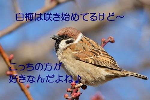 060_20170303185037677.jpg
