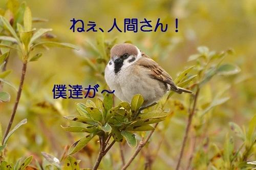 060_20170406190615d5e.jpg