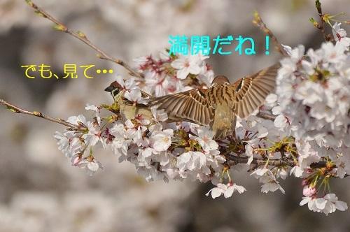 060_201704092124448ee.jpg