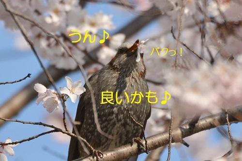 060_20170410183254ba1.jpg