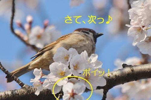 060_2017041521354023e.jpg