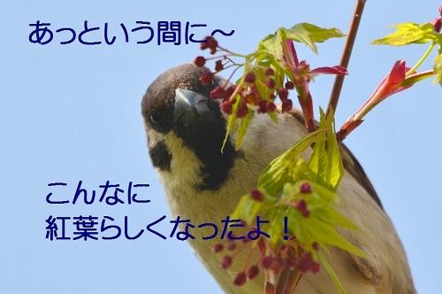 060_20170421193336b21.jpg