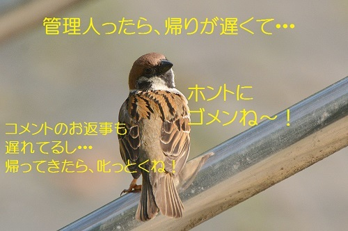 060_20170506211027ff6.jpg