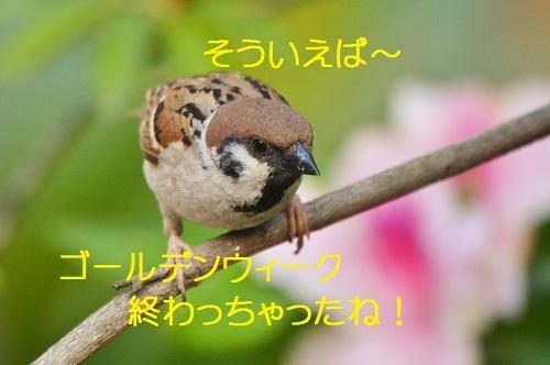 060_20170507215732010.jpg