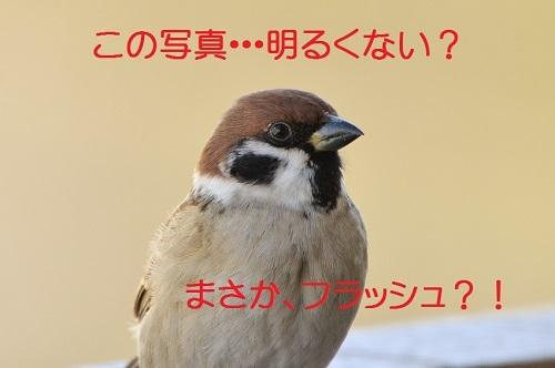 070_20170217203731cf5.jpg