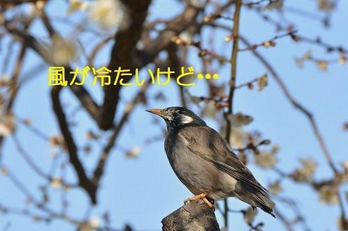 070_20170224192616d0d.jpg