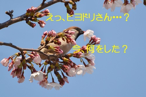 070_20170410183255a46.jpg