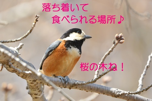 070_20170416211546fe4.jpg